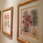 3-gold-framed-botanical-prints