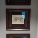 Framed Photographs With Suede Matting